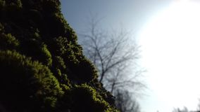 Βρύο και ήλιος στοκ εικόνες με δικαίωμα ελεύθερης χρήσης