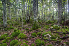Βρύο και βράχος Στοκ εικόνα με δικαίωμα ελεύθερης χρήσης
