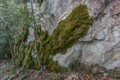 Βρύο και βράχος Στοκ Εικόνα