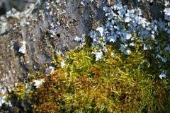 Βρύο και κοτσίδα σε έναν κορμό δέντρων στοκ φωτογραφία με δικαίωμα ελεύθερης χρήσης