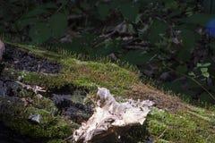 Βρύο και ξηρά άδεια στο πεσμένο κούτσουρο Στοκ φωτογραφίες με δικαίωμα ελεύθερης χρήσης