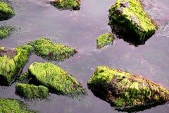 Βρύο και πέτρες Στοκ εικόνες με δικαίωμα ελεύθερης χρήσης