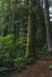 Βρύο-καλυμμένο δέντρο στοκ εικόνα