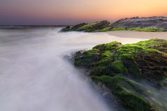 Βρύο πράσινης θάλασσας στην πέτρα Στοκ φωτογραφίες με δικαίωμα ελεύθερης χρήσης