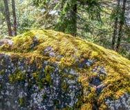 Βρύο σε έναν βράχο Στοκ Εικόνες