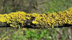 Βρύο σε έναν κλάδο δέντρων Στοκ εικόνα με δικαίωμα ελεύθερης χρήσης