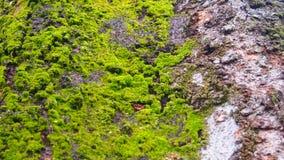 Βρύο στα δέντρα Στοκ Φωτογραφίες