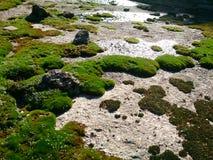 Βρύο στην πέτρα Στοκ εικόνες με δικαίωμα ελεύθερης χρήσης