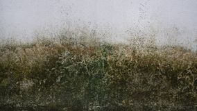 Βρύο στον άσπρο παλαιό τοίχο Στοκ εικόνες με δικαίωμα ελεύθερης χρήσης
