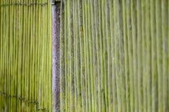 Βρύο στον ξύλινο φράκτη στοκ φωτογραφίες
