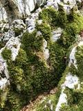 Βρύο στο βράχο στοκ εικόνες με δικαίωμα ελεύθερης χρήσης