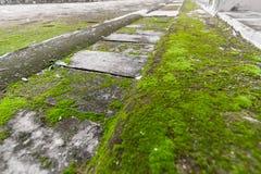 Βρύο στο τσιμεντένιο πάτωμα στοκ εικόνες με δικαίωμα ελεύθερης χρήσης