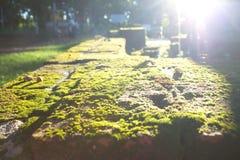 Βρύο Στοκ φωτογραφία με δικαίωμα ελεύθερης χρήσης