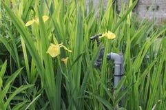 βρύση κήπων Στοκ εικόνα με δικαίωμα ελεύθερης χρήσης