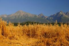 βρώμες βουνών πεδίων κάτω στοκ φωτογραφία με δικαίωμα ελεύθερης χρήσης