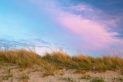 Βρώμες θάλασσας Στοκ φωτογραφία με δικαίωμα ελεύθερης χρήσης
