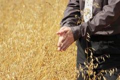 βρώμες πεδίων αγροτών που & Στοκ φωτογραφία με δικαίωμα ελεύθερης χρήσης