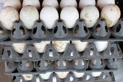 Βρώμικα αυγά παπιών Στοκ Εικόνα