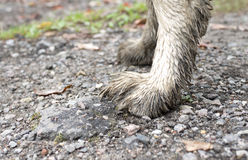 Βρώμικα πόδια Στοκ εικόνες με δικαίωμα ελεύθερης χρήσης