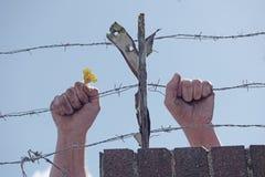 Βρώμικα χέρια που κρατούν ένα λουλούδι πίσω από τα οδοντωτά καλώδια Στοκ εικόνα με δικαίωμα ελεύθερης χρήσης