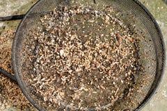 Βρώμικη άποψη επιτραπέζιων κορυφών πουλιών στοκ εικόνα με δικαίωμα ελεύθερης χρήσης