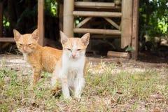 Βρώμικη κίτρινη μιγάς συνεδρίαση γατακιών δύο στο έδαφος Κοίταγμα στο ασβέστιο στοκ φωτογραφία με δικαίωμα ελεύθερης χρήσης