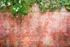 Βρώμικη σύσταση τοίχων με τα λουλούδια στις άκρες Στοκ φωτογραφία με δικαίωμα ελεύθερης χρήσης