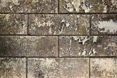 Βρώμικος άσπρος συμπαγής τοίχος με τους λεκέδες του ξηρού βρύου Στοκ Εικόνες