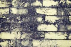 Βρώμικος αναδρομικός τοίχος ψαμμίτη με τους λεκέδες του ξηρού βρύου στοκ εικόνα