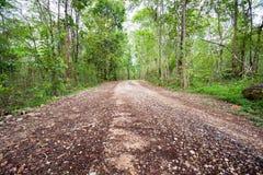 Βρώμικος δρόμος που περνά μέσω του δάσους Στοκ εικόνα με δικαίωμα ελεύθερης χρήσης