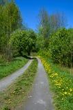 Βρώμικος δρόμος στα λουλούδια πικραλίδων στοκ εικόνες