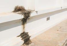 βρώμικος παλαιός τοίχος Βρώμικος τοίχος με το σπασμένο ασβεστοκονίαμα τσιμέντου Στοκ Εικόνες
