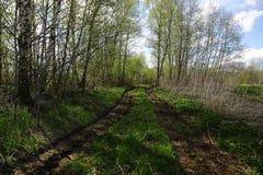 Βρώμικος παλαιός βρώμικος δρόμος μέσω του δάσους Στοκ Εικόνες
