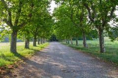 Βρώμικος δρόμος και πράσινη σειρά δέντρων Στοκ Εικόνες