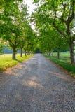 Βρώμικος δρόμος και πράσινη σειρά δέντρων Στοκ εικόνες με δικαίωμα ελεύθερης χρήσης