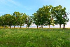Βρώμικος δρόμος και πράσινη σειρά δέντρων Στοκ φωτογραφία με δικαίωμα ελεύθερης χρήσης