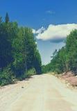 Βρώμικος δρόμος μέσω του θερινού δάσους Στοκ Εικόνες