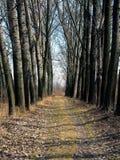 Βρώμικος δρόμος μέσω του τοπικού δάσους στη Σερβία στοκ φωτογραφία