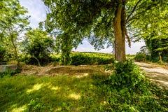 Βρώμικος δρόμος οι λόφοι της Τοσκάνης και Romagna Apennines Στοκ Εικόνα