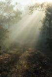 Βρώμικος δρόμος που καλύπτεται με μια ομίχλη Στοκ Φωτογραφίες