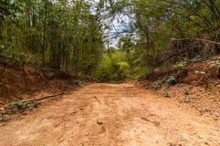 Βρώμικος δρόμος στο άγριο μπαμπού στοκ εικόνες με δικαίωμα ελεύθερης χρήσης
