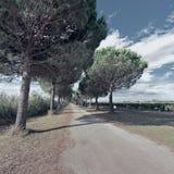 Βρώμικος δρόμος Στοκ Εικόνα