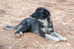 Βρώμικο άστεγο σκυλί Στοκ Εικόνες