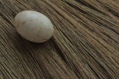 βρώμικο αυγό παπιών στο υπόβαθρο χλοών στοκ εικόνες
