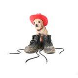 βρώμικο σκυλί μποτών Στοκ Φωτογραφίες