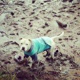 Βρώμικο σκυλί στοκ εικόνες με δικαίωμα ελεύθερης χρήσης
