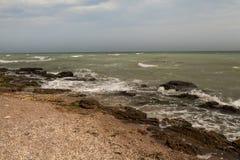 Βρώμικο σύνολο θαλάσσιου νερού του φυκιού Στοκ Φωτογραφίες