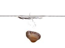 Βυθίζοντας κοχύλι θάλασσας Στοκ Φωτογραφία