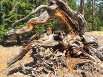 Βυθισμένη σύνδεση το δάσος στοκ εικόνες