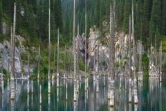 Βυθισμένο δάσος στα βουνά Στοκ εικόνες με δικαίωμα ελεύθερης χρήσης